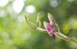 Purple orchid in green garden. Stock Photography