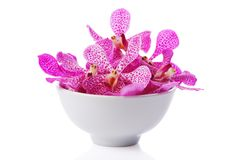 Purple orchid head Royalty Free Stock Images