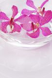 Purple orchid head floating Royalty Free Stock Photo