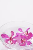 Purple orchid head floating Royalty Free Stock Image