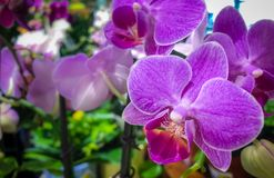 Purple orchid head with floral background Stock Photography
