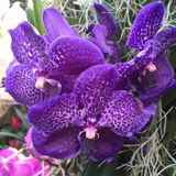 Purple orchid. In Kew Gardens stock images