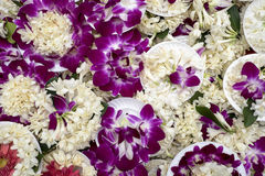 Purple Orchid Offerings Royalty Free Stock Photos