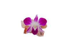 Purple orchid. Placed on the marble Royalty Free Stock Photo