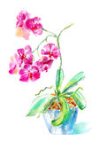 Purple orchid in a pot. Stock Photo