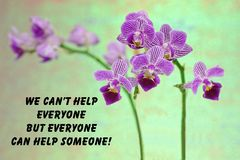 Purple orchid quote Royalty Free Stock Photo