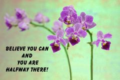 Purple orchid quote. Motivational quote about life  with a  beautiful purple orchid on a green background Royalty Free Stock Photography