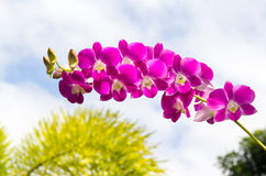 Purple orchid. Red orchid with water droplets on petals Stock Photos