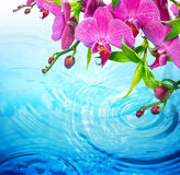 Purple orchid on rippled blue water Royalty Free Stock Photo