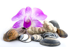 Purple orchid with shells and coral Stock Photo