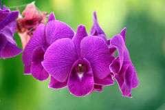 Purple orchid on tre. Stock Photo