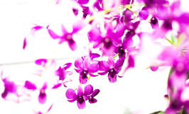 Purple orchid on tree Royalty Free Stock Image