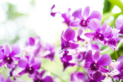 Purple orchid on tree Stock Images