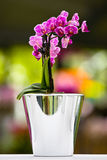 The purple orchid in vase Royalty Free Stock Image