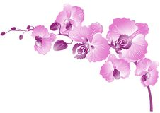 Purple orchid. Vector illustration Stock Photo