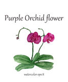 Purple orchid watercolor flower Royalty Free Stock Image