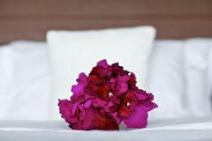 Purple orchid wedding bouquet on bed Royalty Free Stock Photos