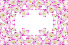 Purple orchid on white background. Beautiful gentle branch of white romantic orchid flowers isolated Stock Photo