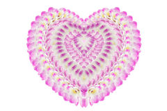 Purple orchid on white background. Heart shape made from pink orchid flowers isolated on white background Royalty Free Stock Photography
