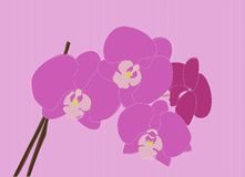 Purple Orchids. Beautiful purple orchids in bloom. If you buy the additional file, each object is on a different layer, so you can change colors or move things Royalty Free Stock Image