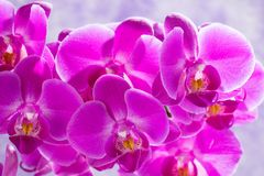Purple orchids background Stock Photos