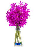 Purple orchids bouquet in a vase. Stock Image