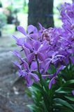 Purple Orchids Stock Photos