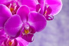 Purple orchids composition Stock Photos