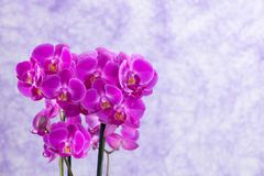 Purple orchids corsage Stock Images