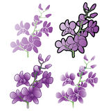 Purple Orchids, Different versions Stock Image