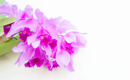 Purple orchids flower on white background and copy space. The Purple orchids flower on white background and copy space Stock Images