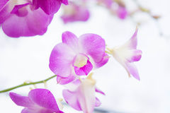 Purple orchids flowers in the park Stock Images