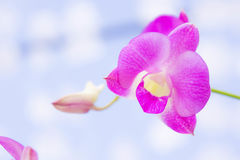 Purple orchids flowers in the park Royalty Free Stock Images