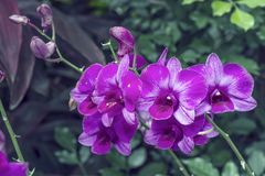 Purple orchids in garden Stock Photo
