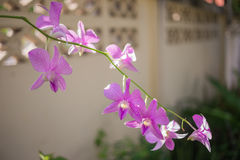 Purple orchids and green. Stock Photo
