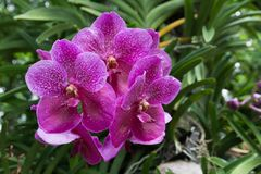 Purple orchids in the park. Bunch of beautiful purple orchids in the park royalty free stock image