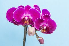 Purple orchids stock photography