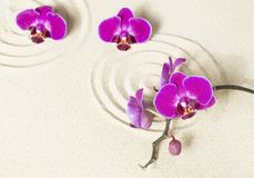 Purple orchids on sand background royalty free stock photography