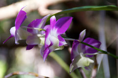Purple Orchids Side View Stock Images