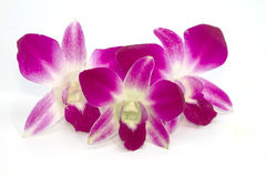 Purple orchids. On a white background royalty free stock image