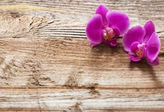 Purple orchids on wooden background Royalty Free Stock Photos