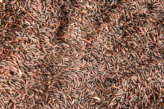 Purple organic rice grains Stock Photos