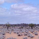 Purple Outback landscape Royalty Free Stock Photo