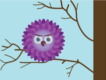 Purple owlet Royalty Free Stock Photo