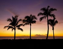 Purple Palms Sunset. Sunset over the Pacific Ocean in Oahu with four palm trees across the frame in silhouette Stock Photography