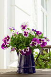 Purple pansies in blue jug Stock Photo