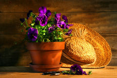 Purple pansies with old straw hat Stock Photo