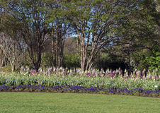 Purple pansies, pink tulips, multi-color foxglove with trees behind. A view Purple pansies, pink tulips, multi-color foxglove with trees behind and neatly Stock Photography