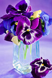Purple pansy flowers. Stock Image