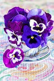Purple pansy flowers. Royalty Free Stock Image